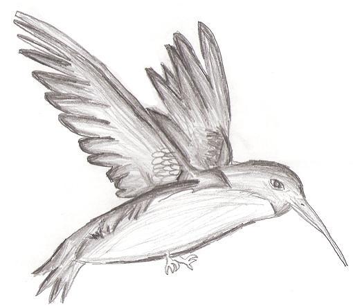 картинки карандашом рисунки животных: