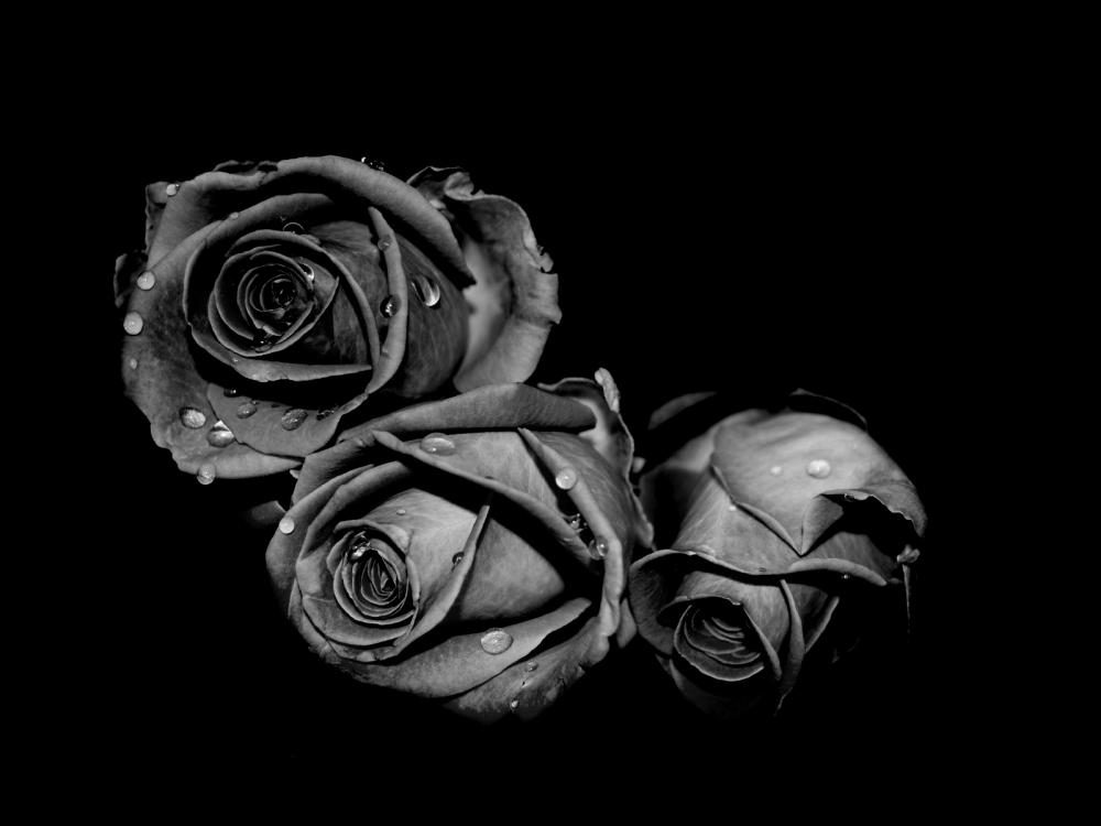 Красивые черно белые картинки цветов 8